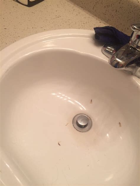 termites in bathroom termites crawling in bathroom sink yelp