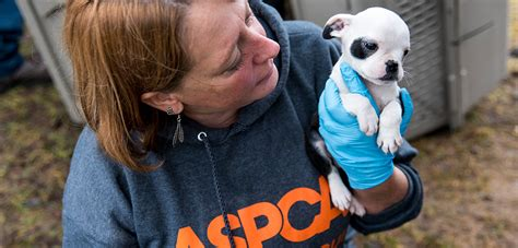 aspca puppies dogs rescued from mi puppy mill are ready for loving homes after months of