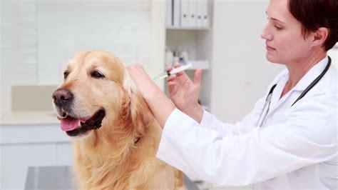medizinisches trolin labrador arzt tierarzt rf 890 666 272 in hd