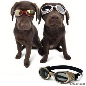 sunglasses for dogs sunglasses buying and size guide