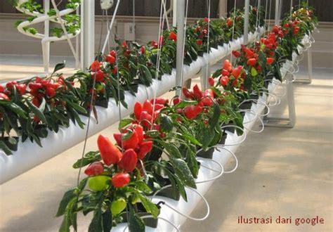 menanam hidroponik rumahan tanam sayuran hidroponik disekitar rumah anda