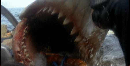 filme schauen deep blue sea 2 bilder und animierte gifs von der wei 223 e hai film gifmania