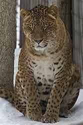 Jaguar Mixed With Creek Sanctuary