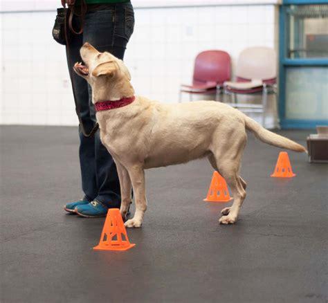 dog trainer animal humane society