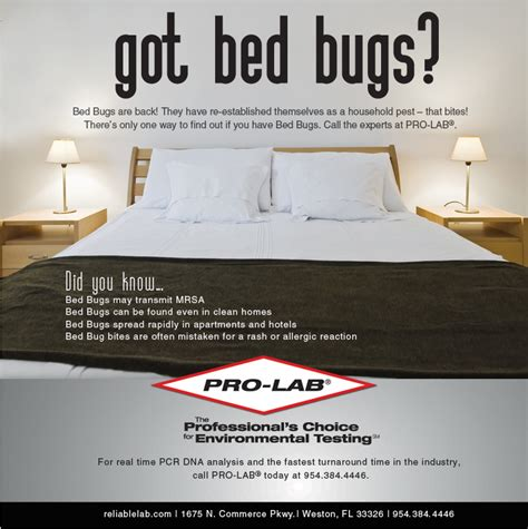 how to check for bed bugs in a hotel how to check for bed bugs at home 28 images travelers