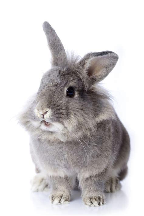Grey Rabbits muddy paws huddersfield services