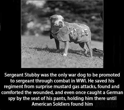 Sgt Stubby Most Decorated War Sgt Stubby Was Also The Most Decorated War So Cool Bsl Is Crap The O Jays