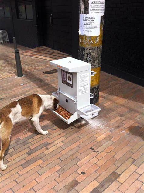 instalan dispensadores de agua  comida  perros de la