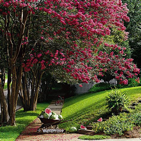 the top trees for small gardens the garden glove