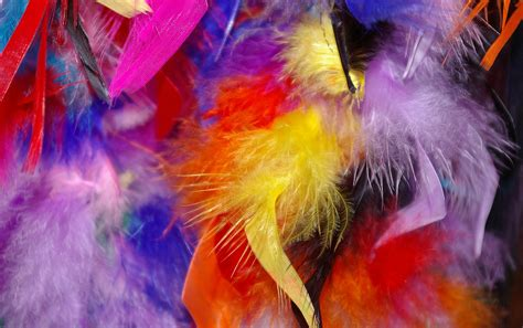 colorful feather colorful feathers related keywords colorful feathers