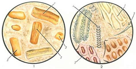 cal microscopic examination of