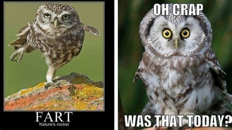 29 funny owl memes that are so funny they re actually a hoot