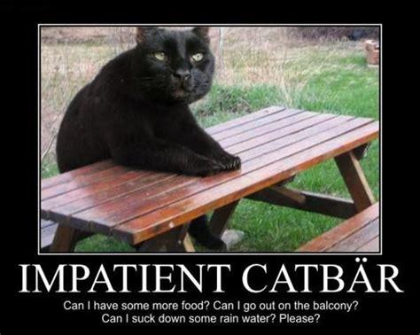 Impatient Meme - impatient catb 228 r patient bear bear sitting at table