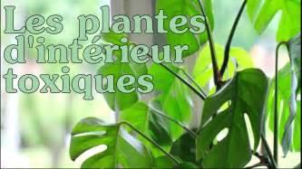les plantes d int 233 rieur toxiques