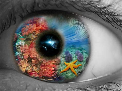 Eye Of The Sea underwater photographer alex varani s gallery creative