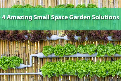 amazing vegetable gardens for small spaces vegetable