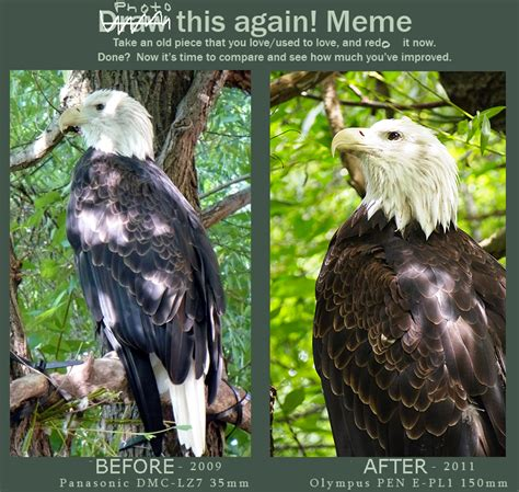 Bald Eagle Meme - photography bald eagle meme by mishkuu on deviantart