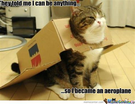 Flying Cat Meme - flying cats memes best collection of funny flying cats