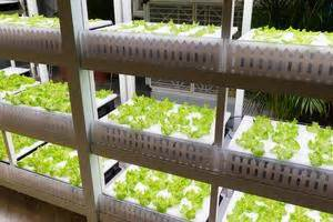 japanese robotic farms  harvest  yearhalf