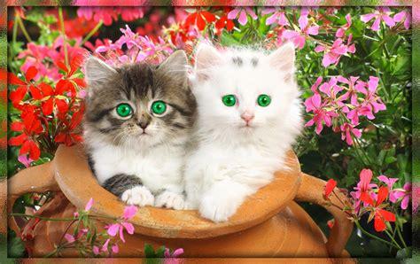 imagenes de paisajes muy hermosos fondo escritorio paisaje bonitos gatitos