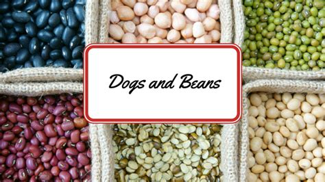 can dogs eat beans can dogs eat beans smart owners