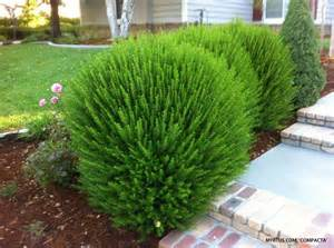 small bushes for landscaping 17 best ideas about shrubs on landscaping