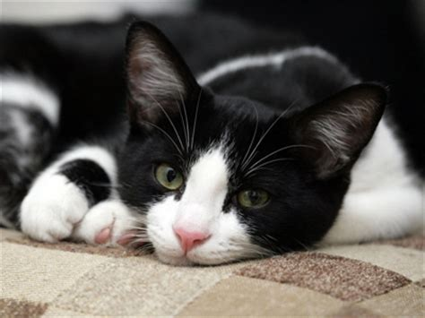 black and white names names for black and white cats