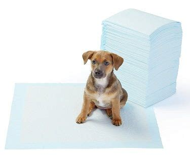 how should it take to potty a puppy my pees next to the pad instead of on the pad what to do