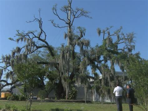 landmark wilmington christmas tree could soon come down