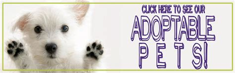 adoptions near me 50 baby kittens for adoption near me kittens wallpapers