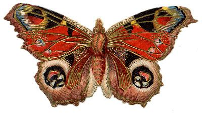 victorian graphic colorful butterfly  moth