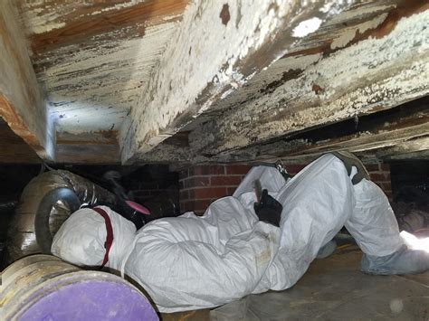 mold inspection before buying a house mold inspection before buying a house 28 images what you need to about mold damage