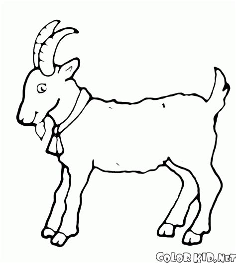 goat coloring pages coloring page goat grazing