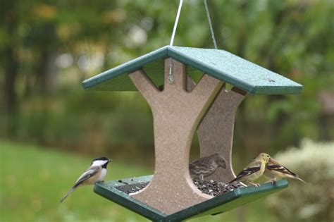why it s ok to leave your feeders up year round backyard