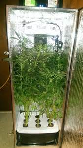 grow box hydroponic growing reviews unique
