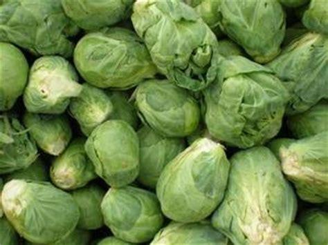 tiroide alimenti da evitare alimenti da evitare con ipotiroidismo russelmobley