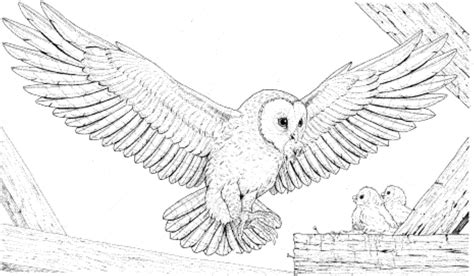 hard coloring pages of owls owl coloring pages coloringsuite com