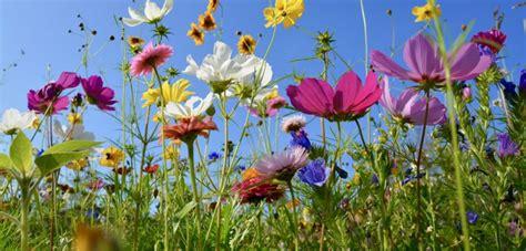 Welche Blumen Im Mai by Welche Blumen Bl 252 Hen Im Juni Haus Garten