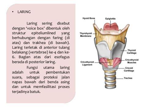 Fisiologi Manusia Edisi 8 anatomi dan fisiologi sistem pernapasan manusia