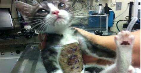 cat  born   rib cage pictures   images  facebook tumblr