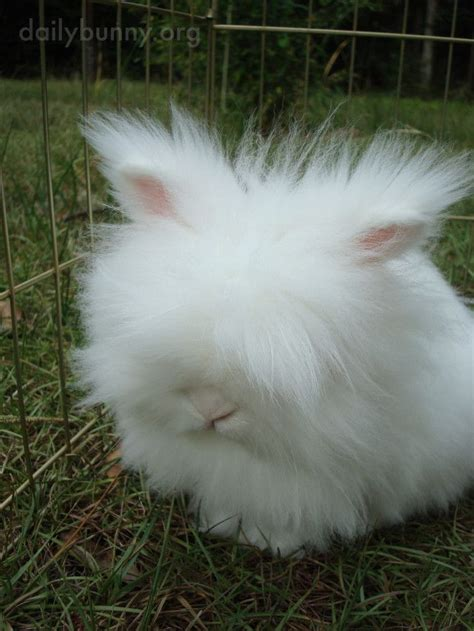 like a bunny fluffy bunny looks like a cloud with ears and a nose the