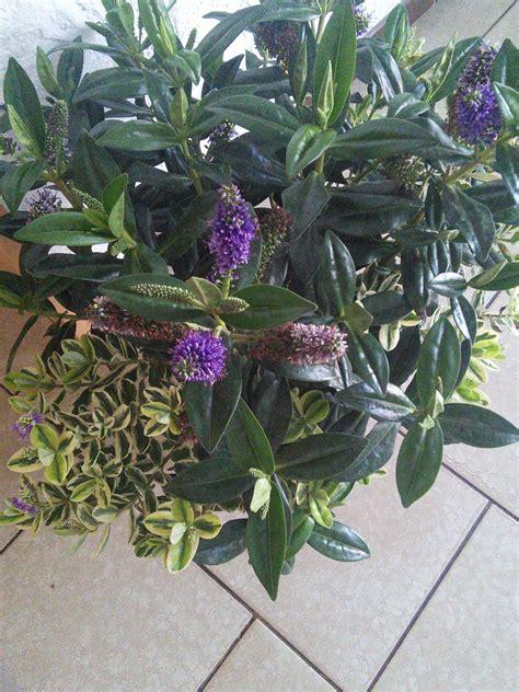 Blumen Pflanzen 3070 by Wer Kann Mir Sagen Was Das F 252 R Eine Pflanze Ist Un
