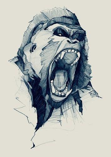 designspiration drawings gorilla sketch art pinterest