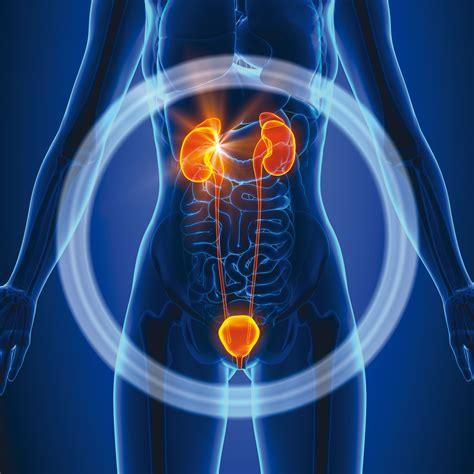 insufficienza renale e alimentazione health tag salute