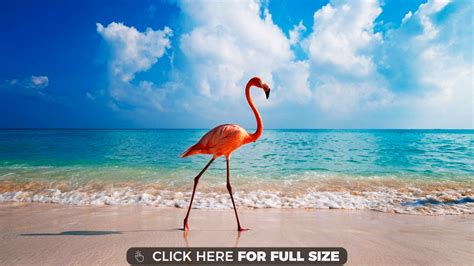 flamingo computer wallpaper new caribbean flamingos 4k wallpaper