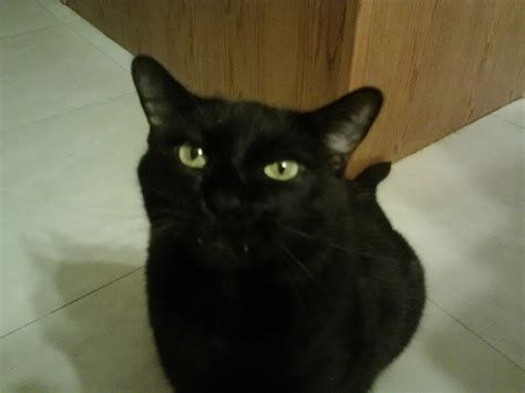 hard   good pictures   black cat cute