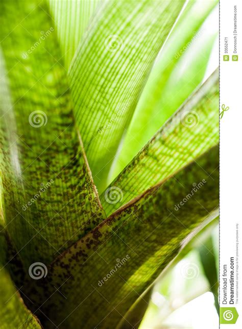calming green calming green series stock image image 33552471