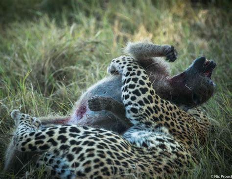 chitabe camp trip report june  paradise   okavango