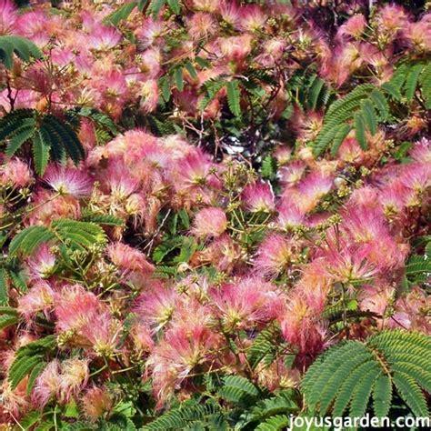 southern flowering shrubs flower friday santa barbara flowering trees