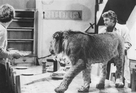film about lion from harrods christian the lion meets old owners reunited true